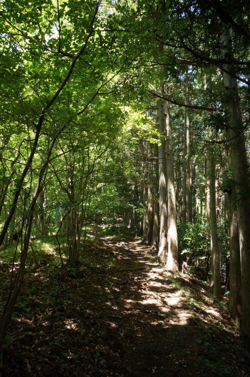 矢倉岳ハイキングコース④