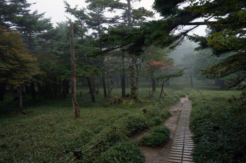 登山歩道④