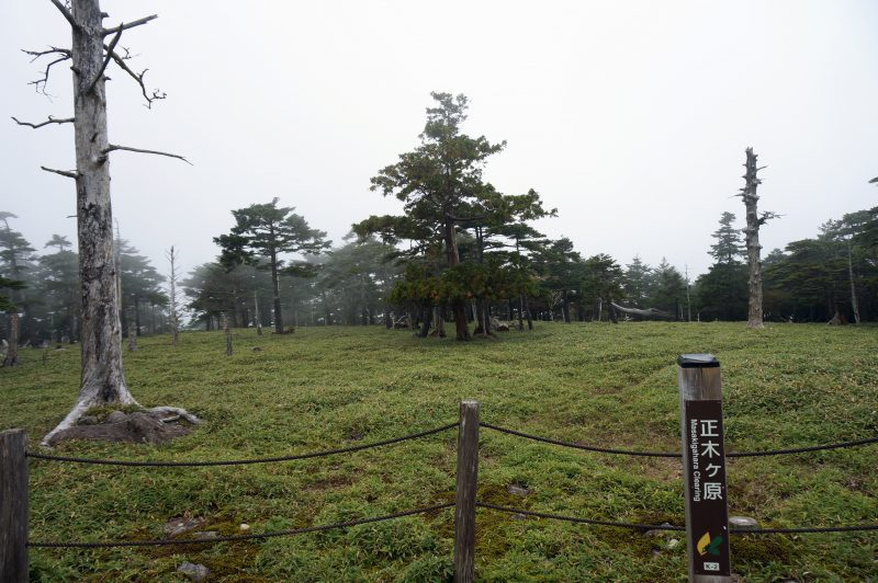 正木ヶ原①