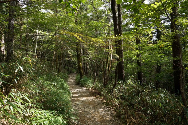 登山歩道①