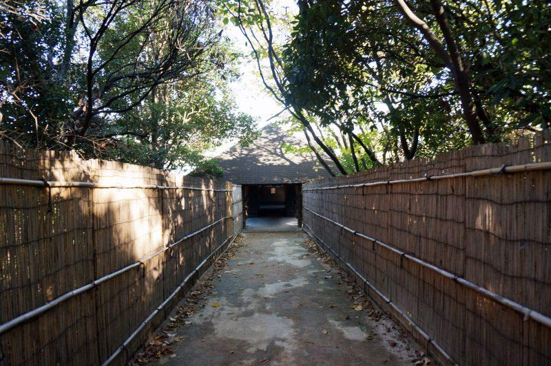 東京湾野鳥公園⑧