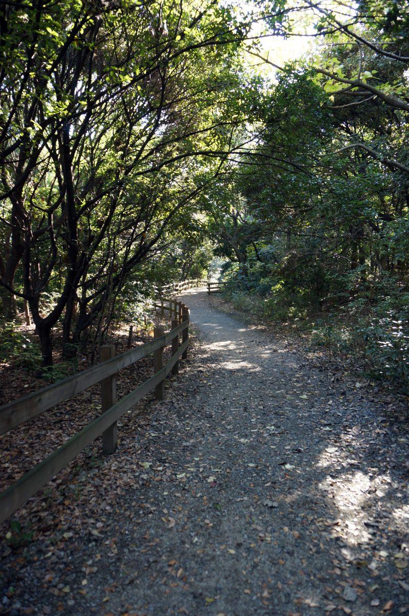 東京湾野鳥公園⑤