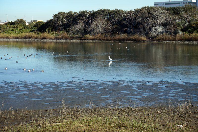 東京湾野鳥公園⑨