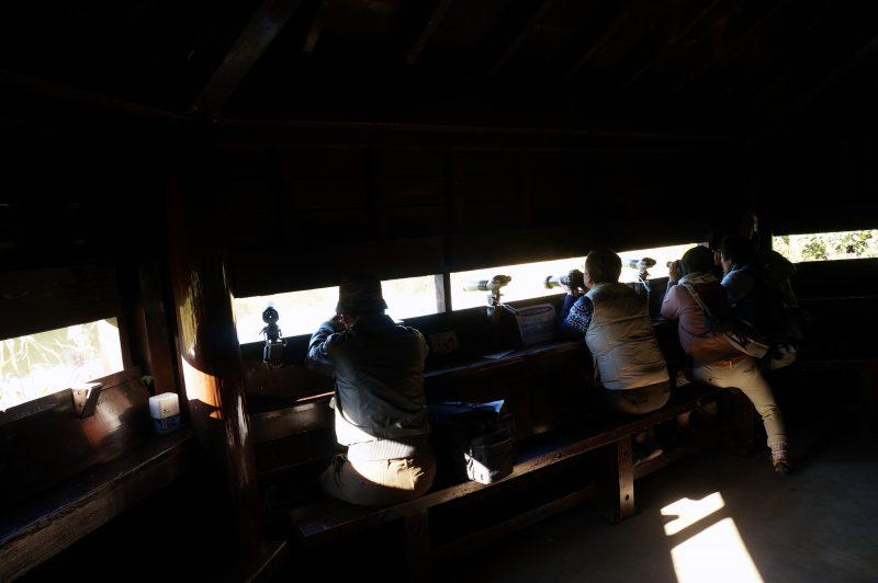 東京湾野鳥公園㉙