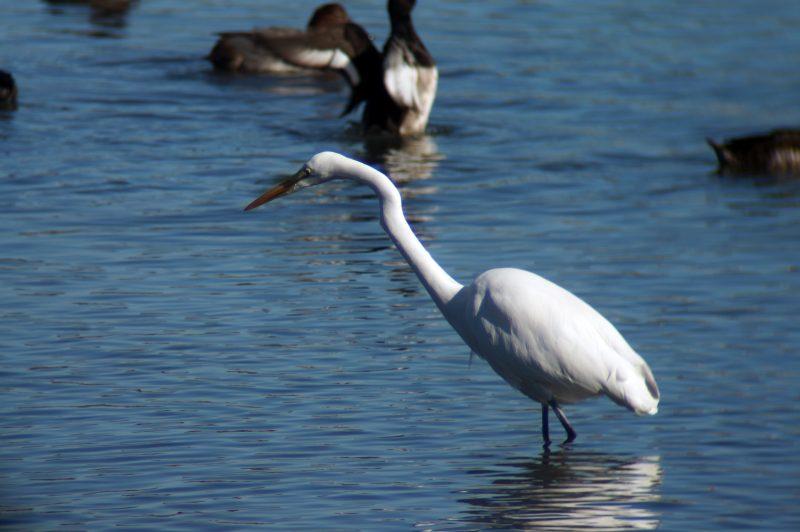 東京湾野鳥公園⑭