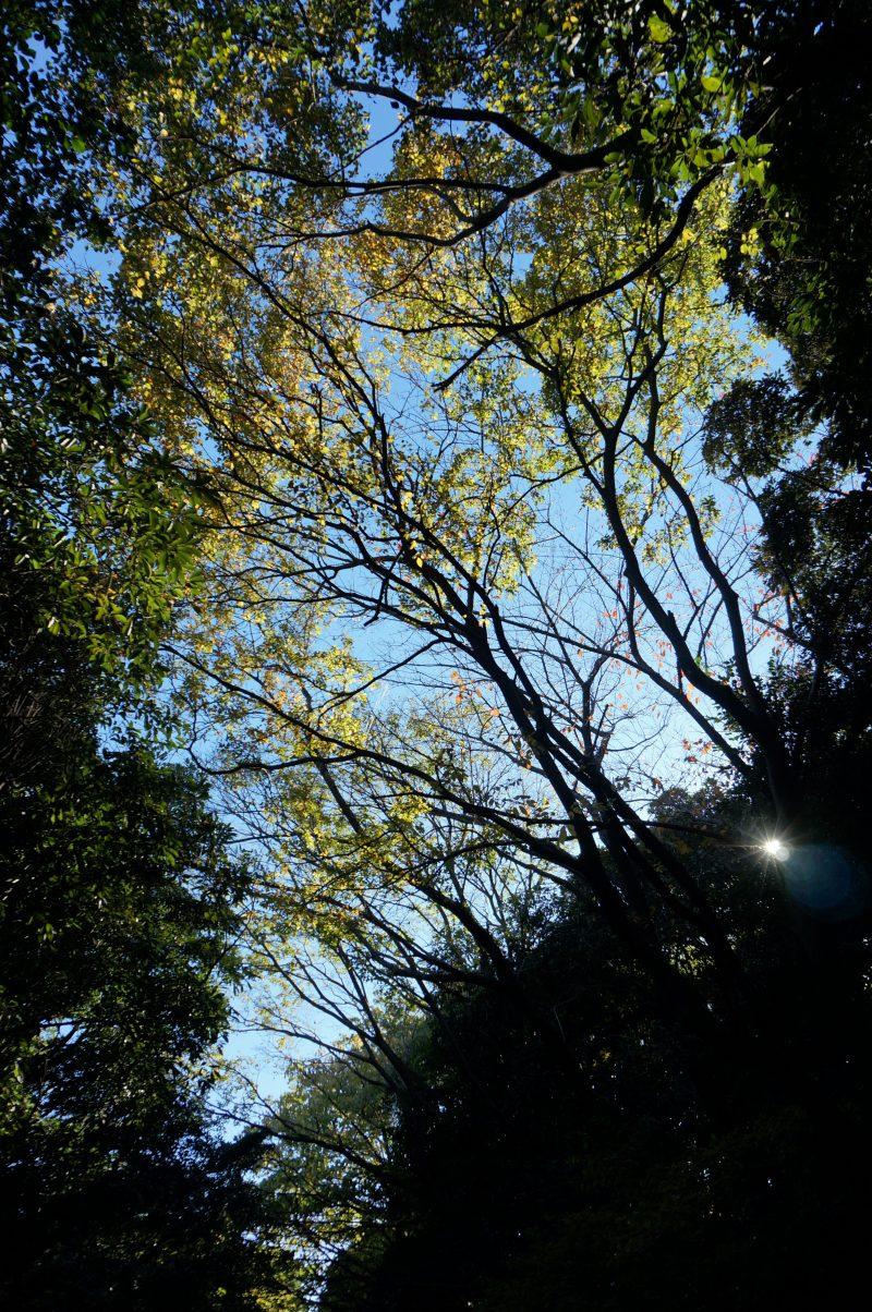 東京湾野鳥公園⑥